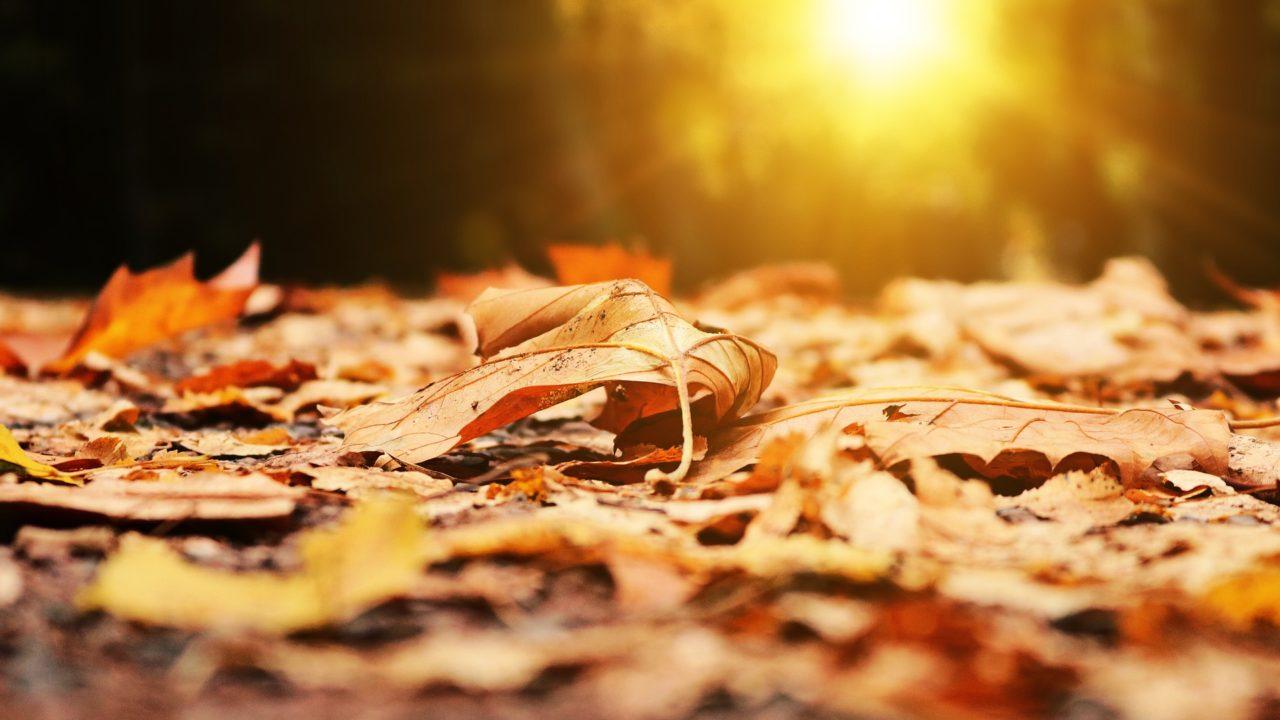 https://www.riccardilex.com/wp-content/uploads/2019/11/autumn-2874547_1920-1280x720.jpg